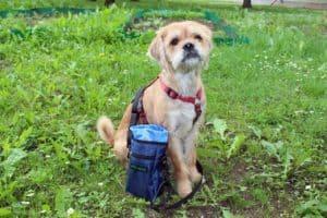 Geschenke für Hundebesitzer: 15+ Ideen für Hunde-Geschenke